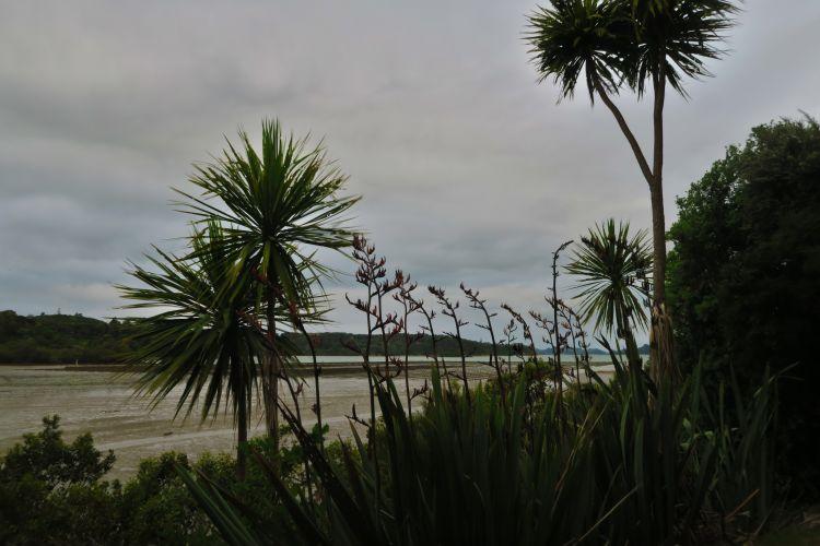 Aroha Island-3