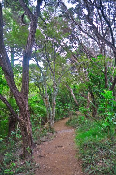 Aroha Island - Rundwanderweg