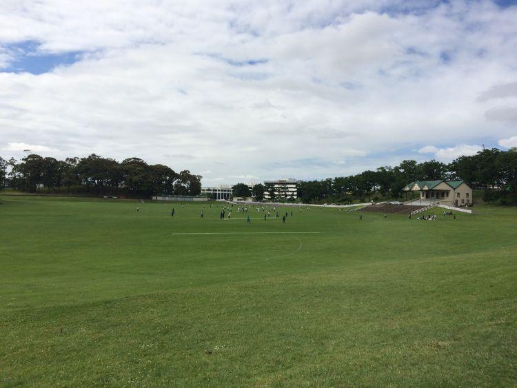 Auckland-Domaene-Cricket-Felder
