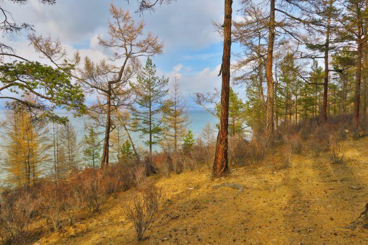 Baikalsee Wald