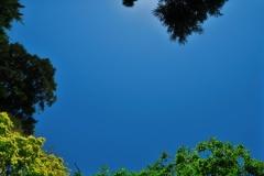 Botanic Garden-2