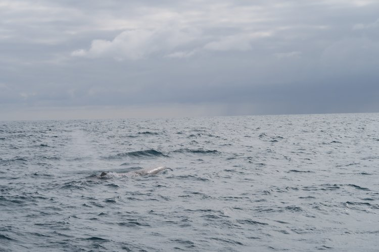 Whale Watch - Wal-2