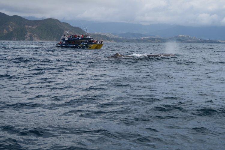 Whale Watch - Wal und Schiff