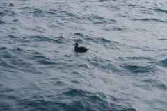 Whale Watch-2