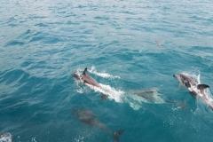 Whale Watch-Delfine