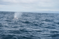 Whale Watch - Wal-1