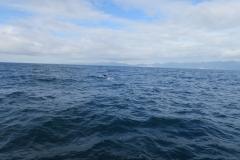 Whale Watch - abtauchender Wal
