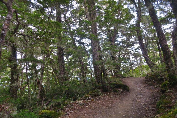 Bäume-mit-Bewuchs