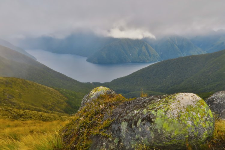Bewachsener-Felsen-Suedfjord