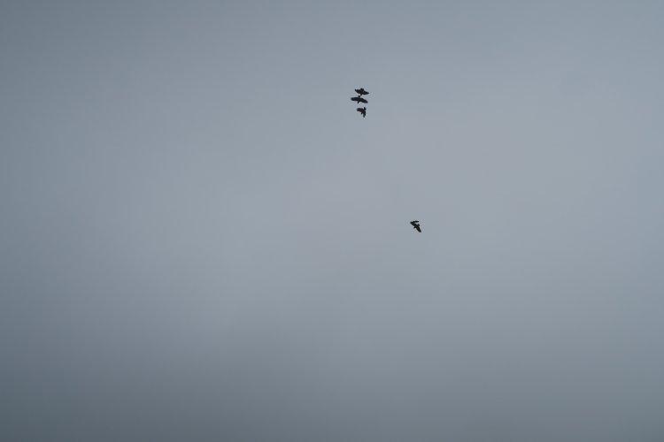 Kea spielen unter der Wolkendecke