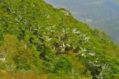 Baumgrenze auf dem Abstieg zur Iris Burn Hut