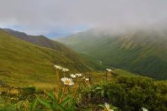 Blumiger Blick ins Tal