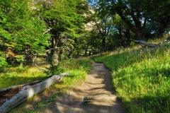 Weg zur Laguna de Los Tres