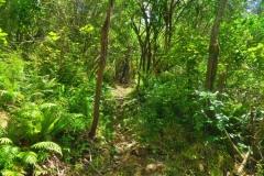 Hopewell Lodge - Track
