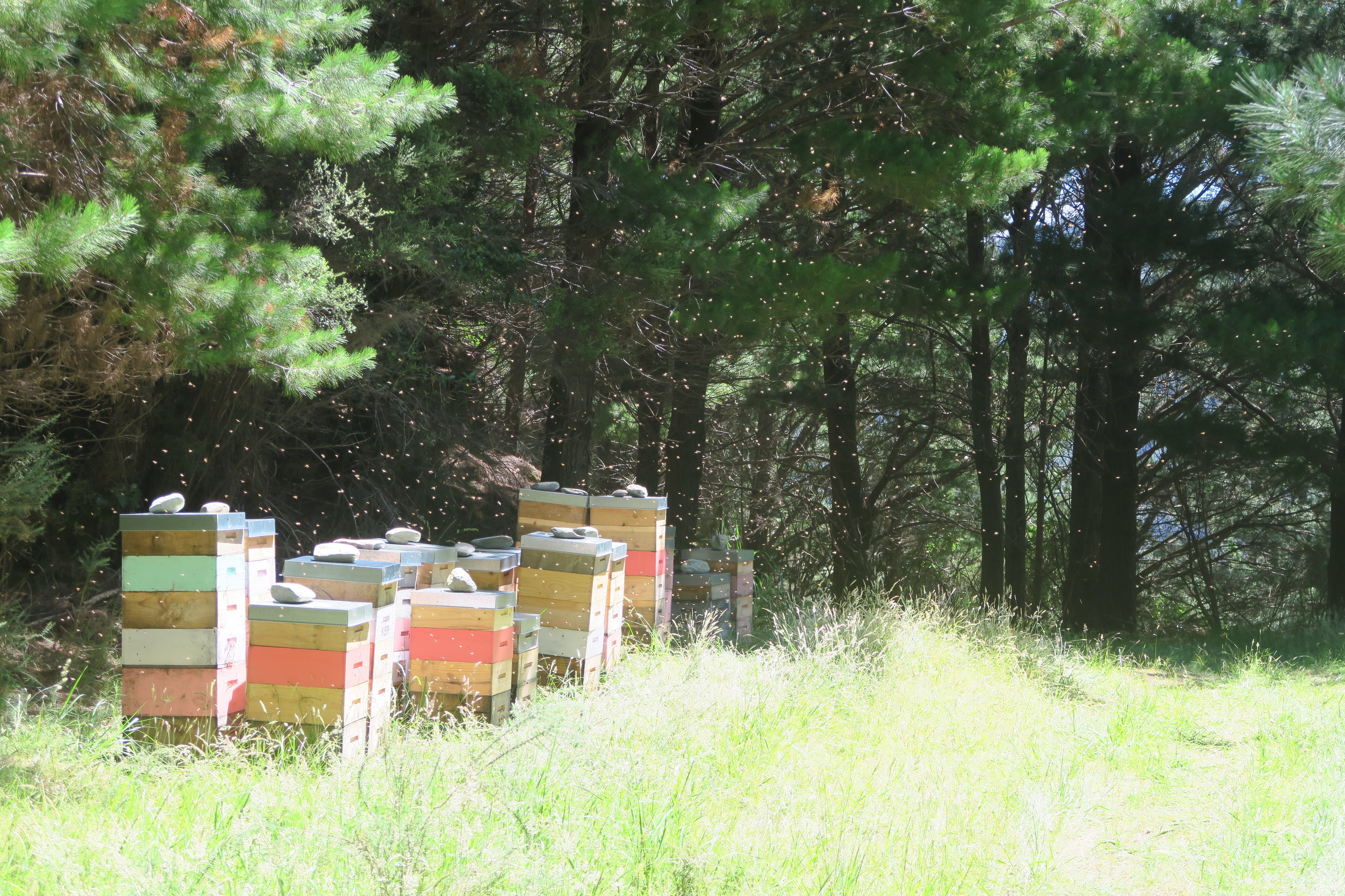 Marlborough Sounds - Bienen