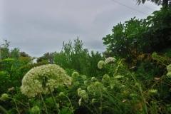Marlborough Sounds - in den Wolken-3