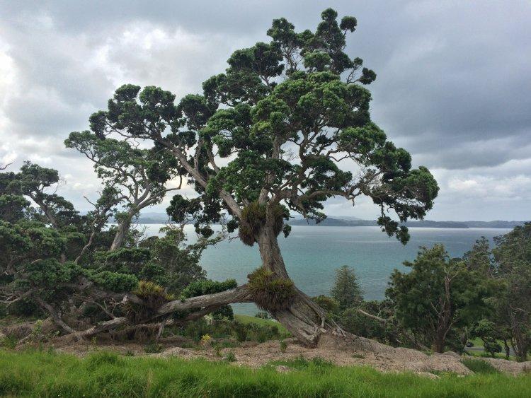 Sandrett Regional Park - Baum