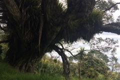 Sandrett Regional Park - Bewachsener Baum
