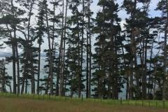 Sandrett Regional Park - Sehe vor lauter Wald kaum noch Meer