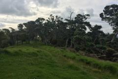 Sandrett Regional Park - Wald