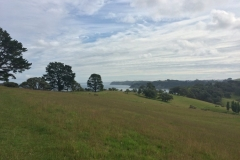 Sandrett Regional Park - Wiesen