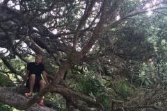 Sandrett Regional Park - im Baum