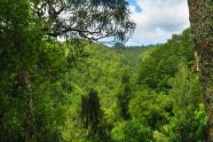Mangakawa Track-Blick zur Ridge