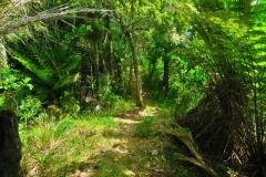 Ridge Track - auf der Ridge