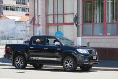 Passender Hund zum Auto
