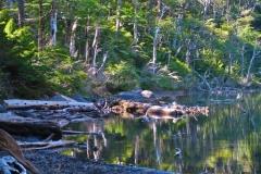 Lago El Toro-2