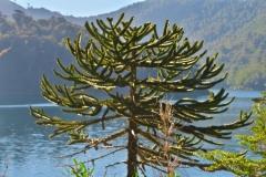 Lago Verde-2