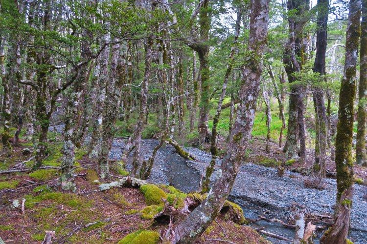 Speargrass Creek - Wald