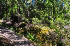 Brunner Peninsula Nature Walk