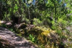 Brunner Peninsula Nature Walk