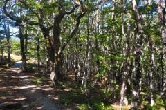 Bushline Track