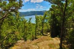 Mount Robert Road - Lake Rotoiti