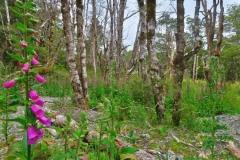 Speargrass Creek - Fingerhut