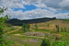 Horeke-Road-Abgeholzte-Flaechen