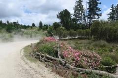 Horeke Road
