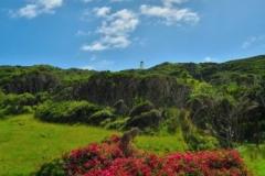 East Cape Lighthouse - Blumen