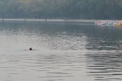 Houhai Hu-Schwimmer