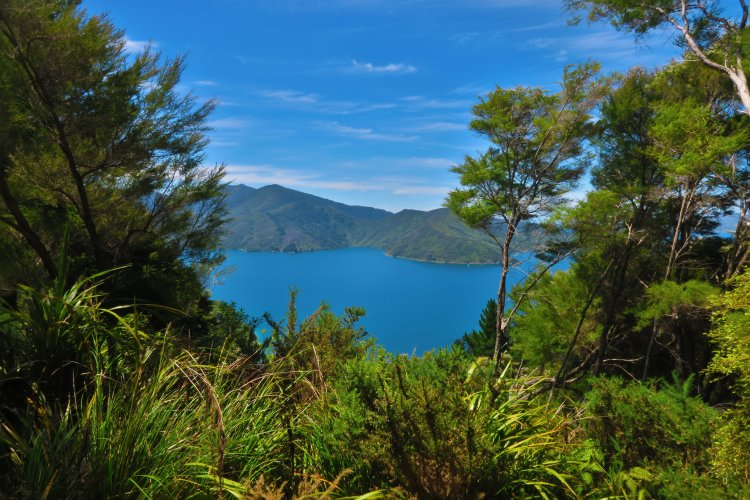 Queen Charlotte Track - Endeavour Inlet-2