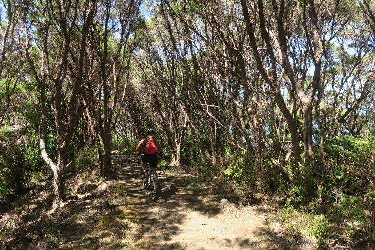 Queen Charlotte Track - Mountain Bikerin