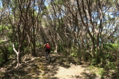 Queen Charlotte Track - Mountain Bikerin
