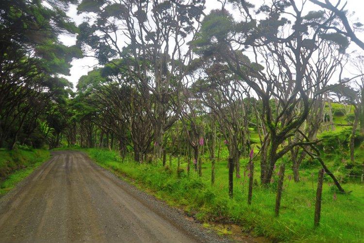 Wainui-Road-Baeume
