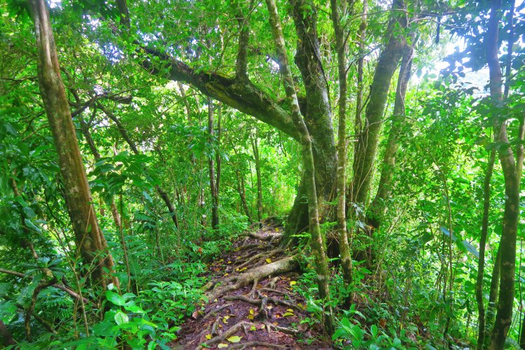 Cross-Island Track - Ridge