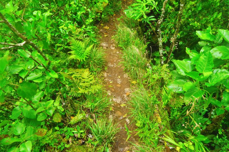 Cross-Island Track - steile Ridge