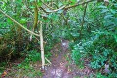 Cross-Island Track - unser Weg