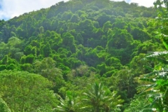 Landwirtschaft vs Urwald