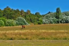 Huella Andina - Pferd